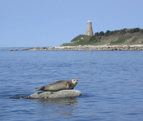 Cape Cod Seal Tour