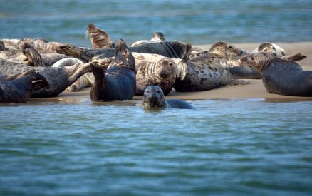 seal watching on Cape Cod
