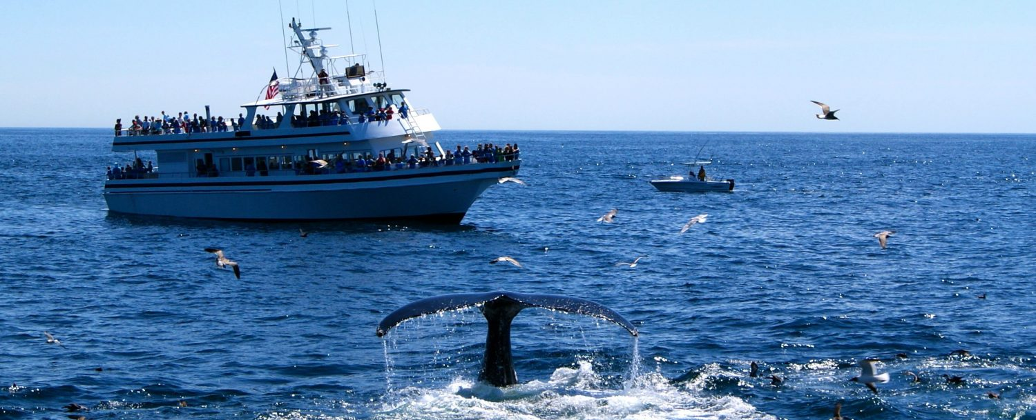 Tourists enjoying whale watching in Cape Cod