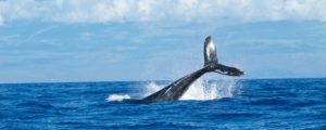 Whale Surfacing - Whale Watching Package
